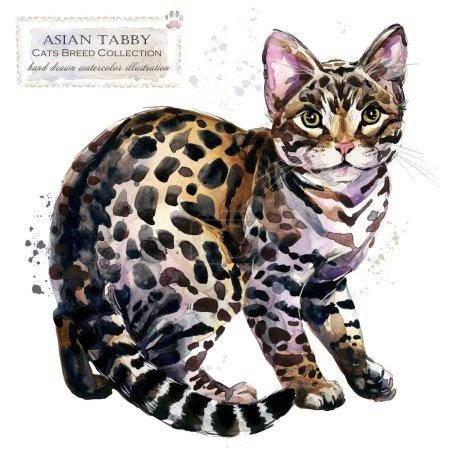Photo pour Chat Tabby asiatique. aquarelle maison illustration pour animaux de compagnie. Série de chats de races. animal domestique. - image libre de droit