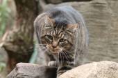 portrait  of cute fluffy pet cat