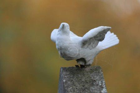 Photo pour Vue rapprochée de la sculpture de colombe au cimetière municipal d'Amsterdam, Pays-Bas - image libre de droit