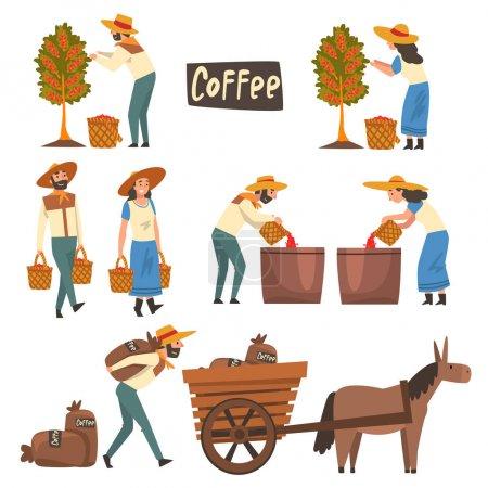 Illustration pour Ensemble de grains de café cueillette, tri et emballage des agriculteurs, étapes de production de l'industrie du café Illustration vectorielle sur fond blanc . - image libre de droit