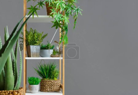 Photo for Wooden bookshelf with various plants over grey wall, free space - Royalty Free Image
