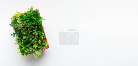Photo for Evergreen plant in pot on white desk background, top view, free space - Royalty Free Image