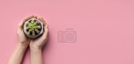Photo for Eco friendly. Woman holding cactus in ceramic pot on pink background with free space, top view - Royalty Free Image