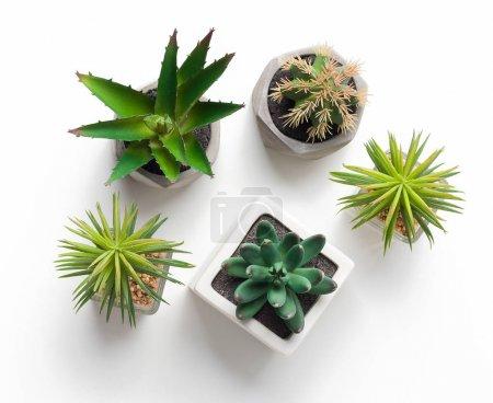 Photo pour Divers cactus et plantes succulentes en pots sur fond blanc, vue de dessus - image libre de droit