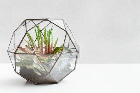 Photo pour Petit jardin avec des plantes succulentes en verre florarium sur mur gris, espace de copie. Concept de jardin maison - image libre de droit