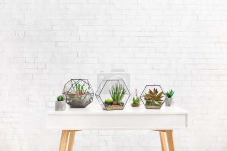 Photo for Composition of geometric florarium vases with succulent plants and cactuses on table at white brick wall background, copy space - Royalty Free Image