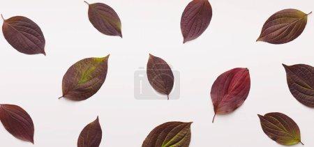 Photo pour Fond d'automne créatif avec de petites feuilles de couleur foncée tombées sur blanc, panorama - image libre de droit