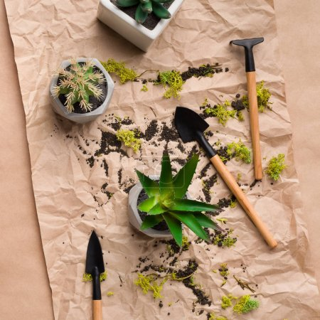 Photo for Plant transplantation. Succulent plants and gardening tools on craft paper, top view - Royalty Free Image