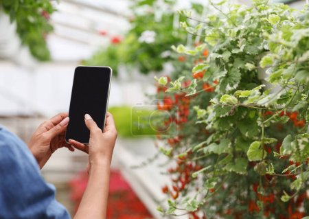 Photo for Using smartphone to work in greenhouse. African american girl holds smartphone with blank screen and takes photo of flowers and plants, cropped - Royalty Free Image