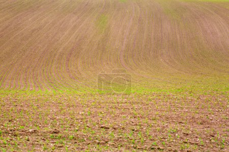 Photo for Cultivated farm field agriculture landscape. Brown farmer field background. - Royalty Free Image