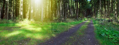 Photo for Trees and Sunset in summer Forest . Nature background. - Royalty Free Image