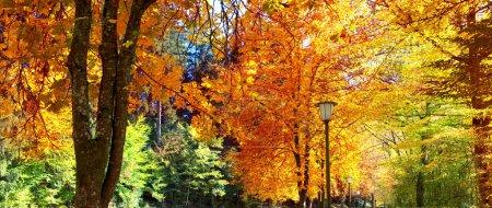 Photo pour Automne érable sur le soleil. Paysage d'automne. - image libre de droit