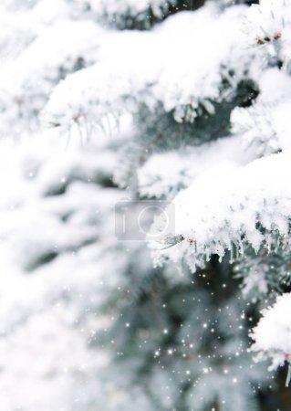 Photo pour Branches de sapin recouvert de neige blanche. Fond de nature hiver. - image libre de droit