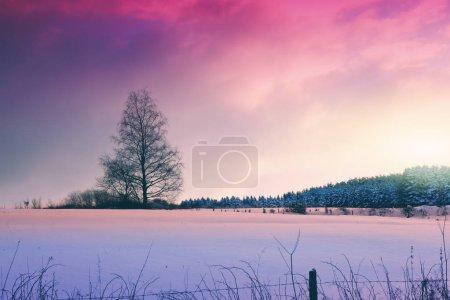 Photo pour Paysage d'hiver magnifique avec la neige couvrait arbre. Fond de l'hiver. - image libre de droit