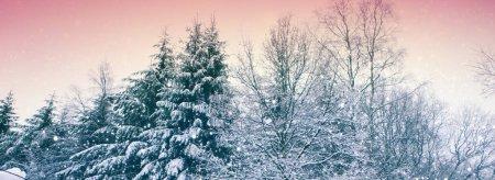 Photo pour Paysage d'hiver magnifique avec la neige couvertes d'arbres. - image libre de droit