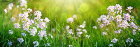 Photo for Small wildflowers on grass meadow and sunlight. - Royalty Free Image