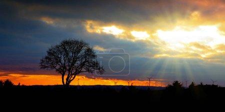 Photo pour Des éoliennes au coucher du soleil. Ciel et arbre colorés . - image libre de droit