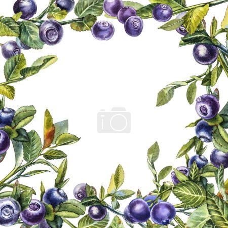 Photo for Blueberry. Watercolor botanical illustration. Hand drawn watercolor painting blueberry on white background - Royalty Free Image