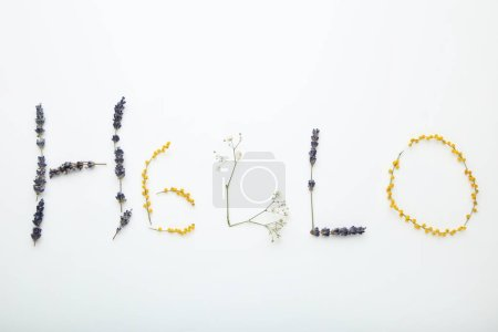 Inscription Hello by flowers on white background