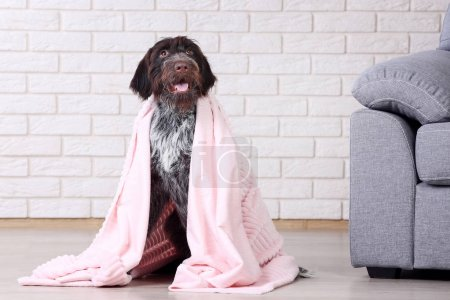 German pointer dog with plaid sitting on the floor