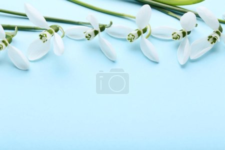 Photo pour Fleurs de goutte de neige sur fond bleu - image libre de droit