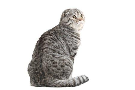 Photo pour Joli chat isolé sur fond blanc - image libre de droit