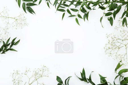 Gypsophila flowers and green leafs on white background