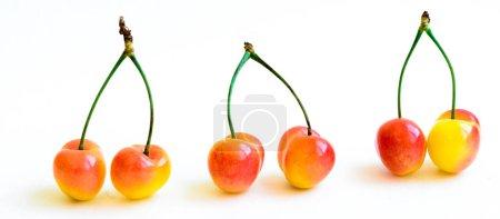 Foto de Una fila de tres grupos de cerezas Rainer se unió al tallo aislado sobre fondo blanco. cerezas orgánicas recién seleccionadas cultivadas en el valle de Yakima, estado de Washington, Usa.. - Imagen libre de derechos