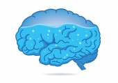 Water inside of the human brain isolated on white background Illustration about composition of body