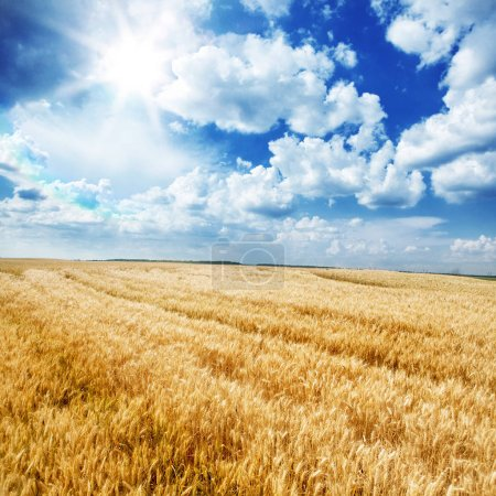 Photo for Wonderful landscape of a golden wheat field and a blue sky - Royalty Free Image