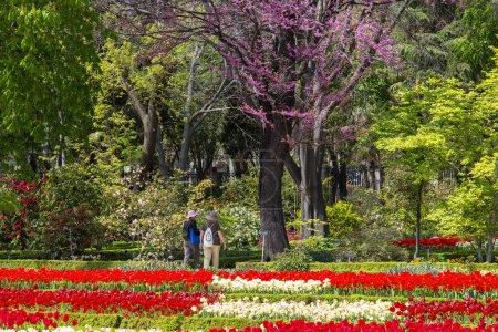 Photo pour Espagne, Madrid, Jardin botanique - image libre de droit