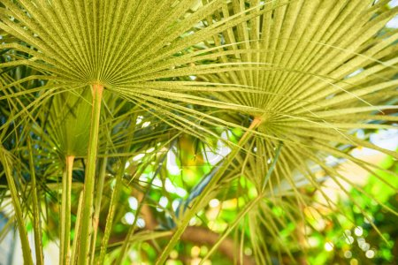 Photo for Summer background with palm leaves on tree. Sunshine, selective focus, abstract - Royalty Free Image