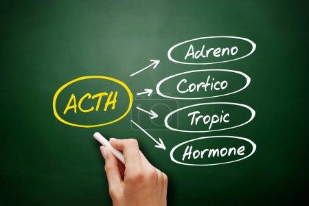 ACTH - Akronym für Adrenokortikotropes Hormon, medizinischer Hintergrund