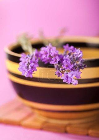 Photo pour Gros plan de fleurs de lavande violette - image libre de droit