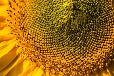 Macro abstract health plant detail background fibonacci