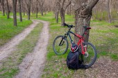 Forest path and bike placed near a tree