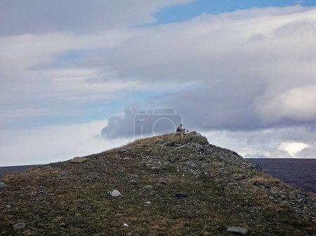 Photo pour La sterne au sommet de la colline. Oiseau nordique sur le Yamal - image libre de droit