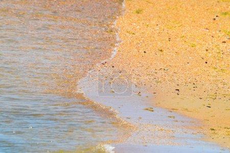 Photo pour Vagues de la mer côtière. Eau de mer aux algues. Algues côtières. Plage de la mer - image libre de droit