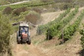 The Waterkloof Wine Estate in Somerset West, Western Cape, South Africa. Tractor at work spraying the vines during summer.
