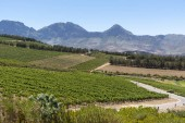 The Waterkloof Wine Estate in Somerset West, Western Cape, South Africa. A view of the Hottenttot Mountains.