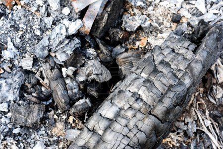 Burnt Charcoal and Old Extinguished Fire