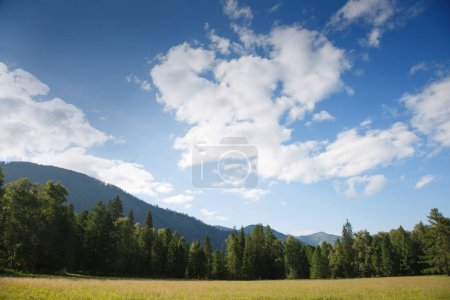 Photo for Landscape with meadow and forest on a summer morning - Royalty Free Image