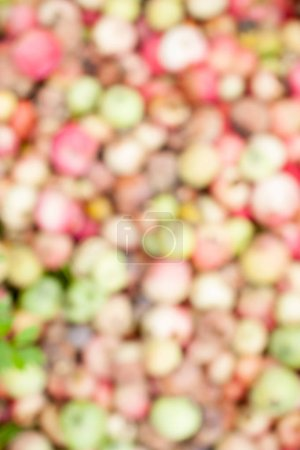 Photo for The background image of the garden is blurred . The pattern of use in the collages. - Royalty Free Image