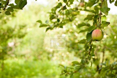 Foto de La imagen de fondo del jardín está borrosa. El patrón de uso en los collages . - Imagen libre de derechos