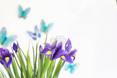 Photo for Purple irises on a white background with butterflies - Royalty Free Image
