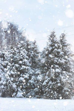 Photo pour Neige d'arbre sapin hiver - image libre de droit