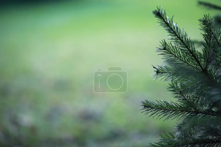 Photo for End of summer warm season in the park - Royalty Free Image