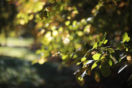 Photo pour Fond d'automne dans le parc pendant la journée - image libre de droit