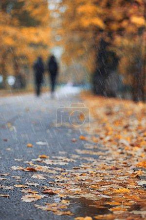 Photo pour Pluie d'automne dans le parc pendant la journée - image libre de droit