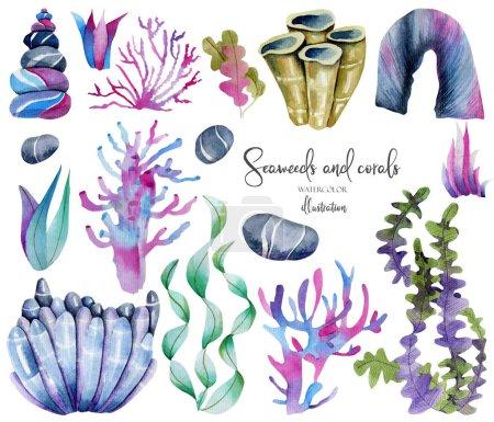 Photo pour Aquarelle algues et pierres de mer colllection, peinte à la main isolée sur un fond blanc - image libre de droit
